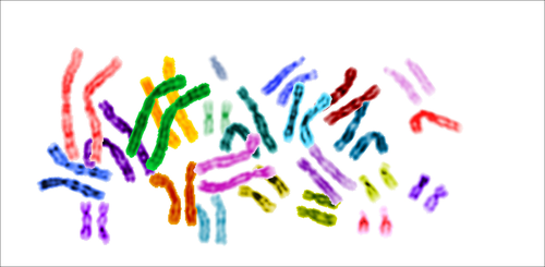 Karyotype_color_chromosomes_white_background